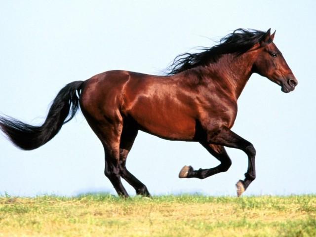 red horse wild