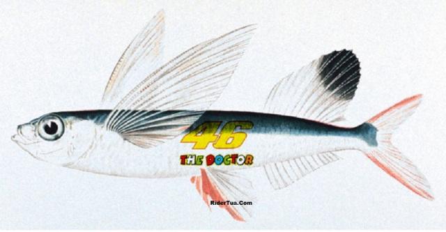 Valentino Fish